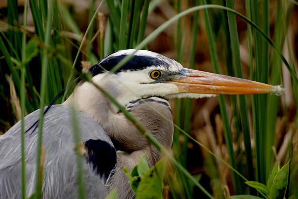 Birds of the Everglades