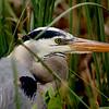 Birds of the Everglades :